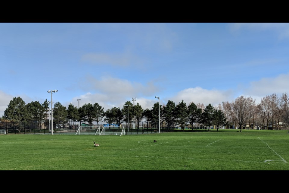 It appears Canada Geese will be the only ones on the pristine pitch at Kitchener Park. Due to the pandemic, the Orillia & District Soccer Club has cancelled its season. Dave Dawson/OrilliaMatters