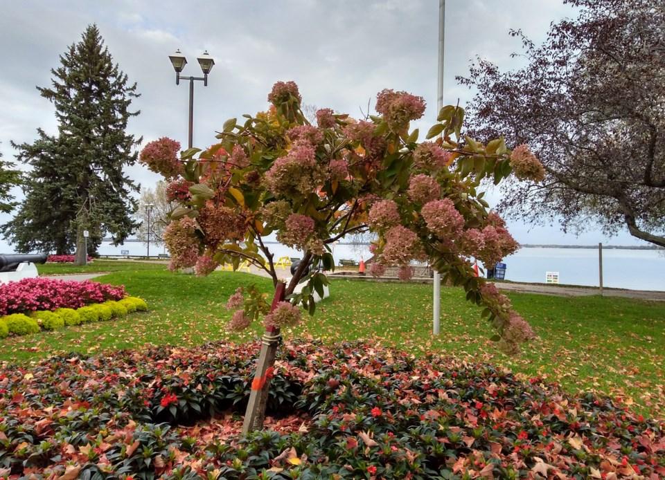 USED 2020-10-13 GM2 park flowers