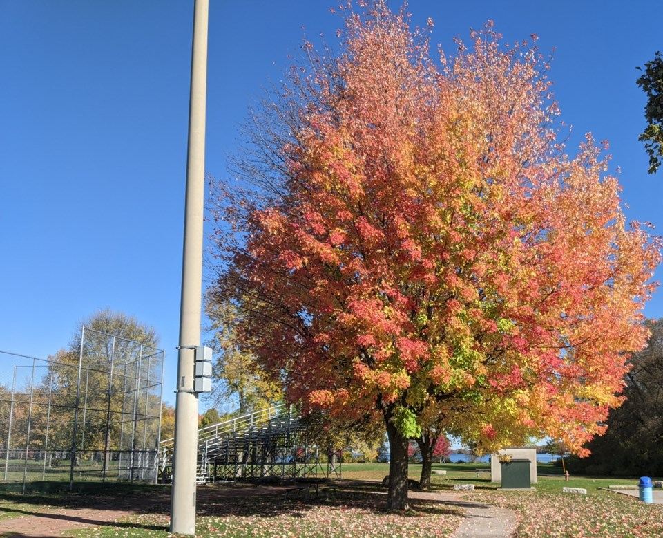 USED 2020-10-13 GM8 tree by stands at udell