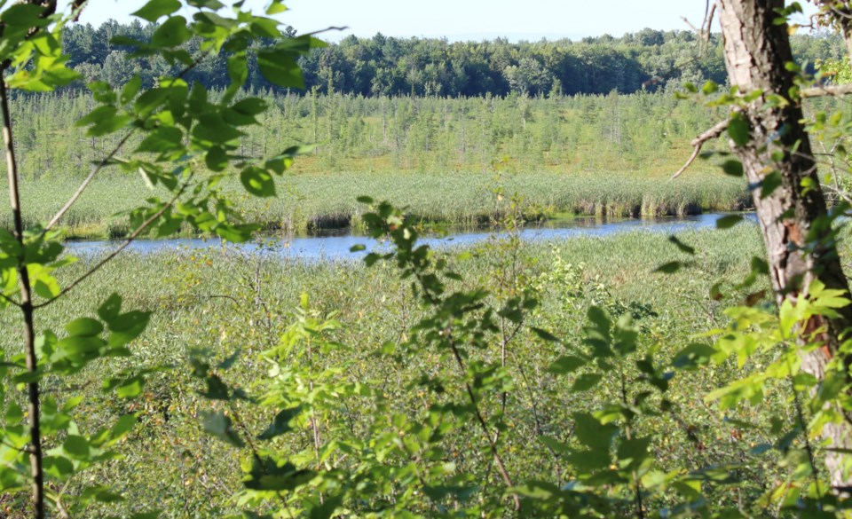 USED 2018-08-31 Mer Bleue Conservation Area mv8