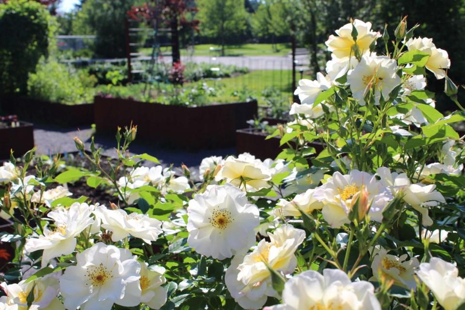 USED 2019-06-27 Lansdowne community garden MV1