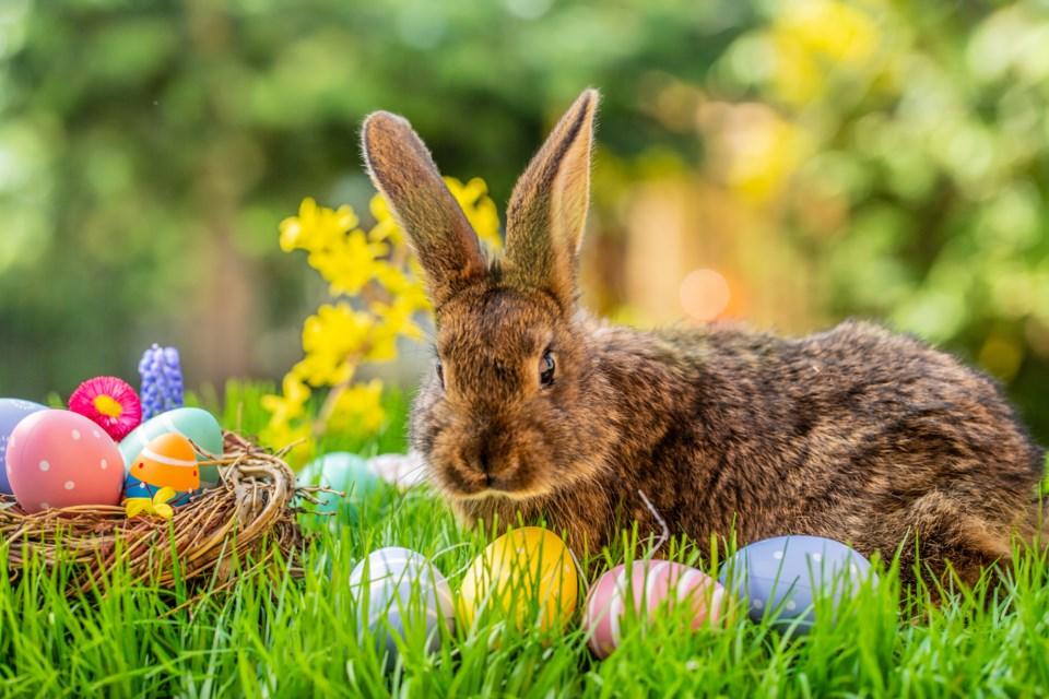 Easter Bunny AdobeStock_329674122