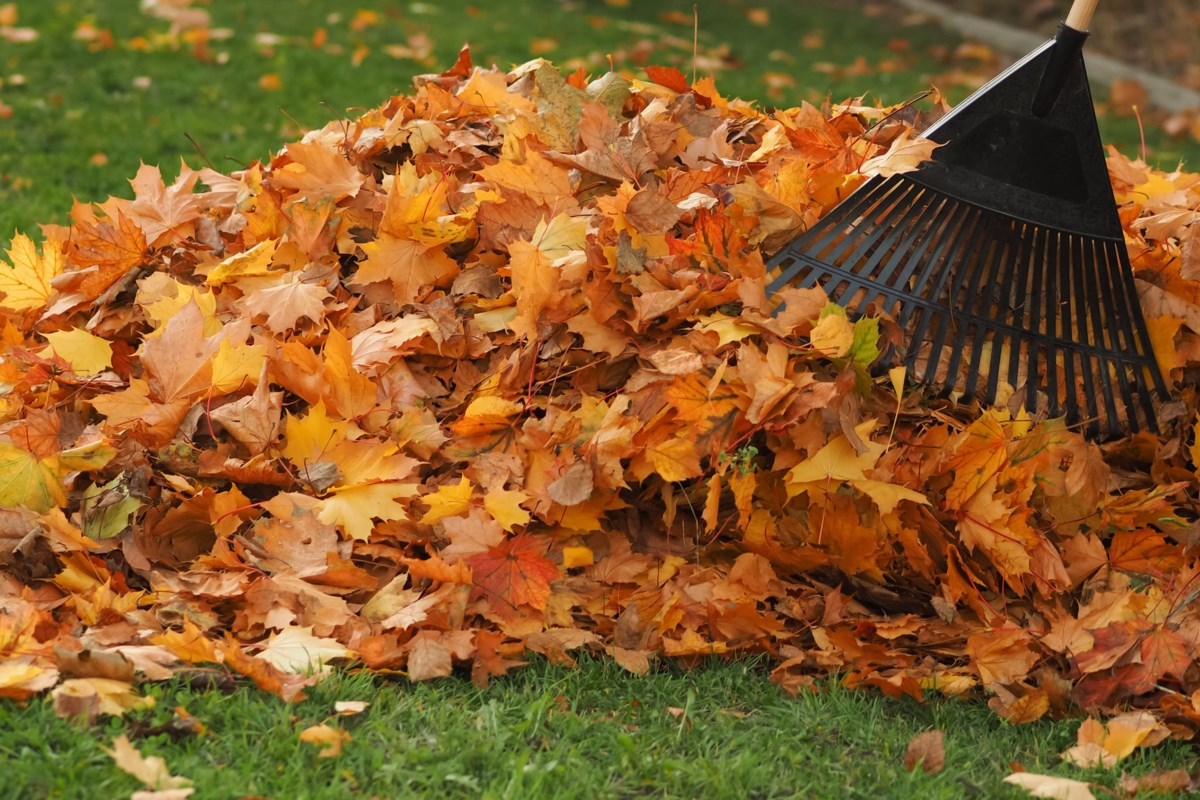 Conservancy encourages you to keep your rake in the shed