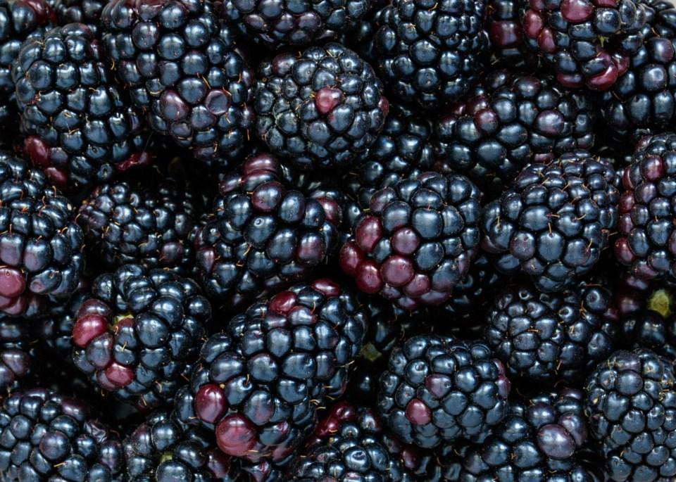 blackberries berries stock