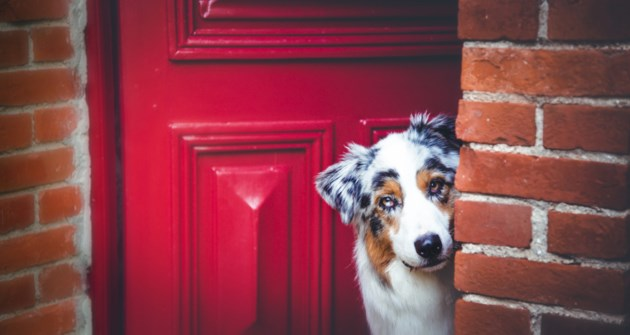 dog at door stock