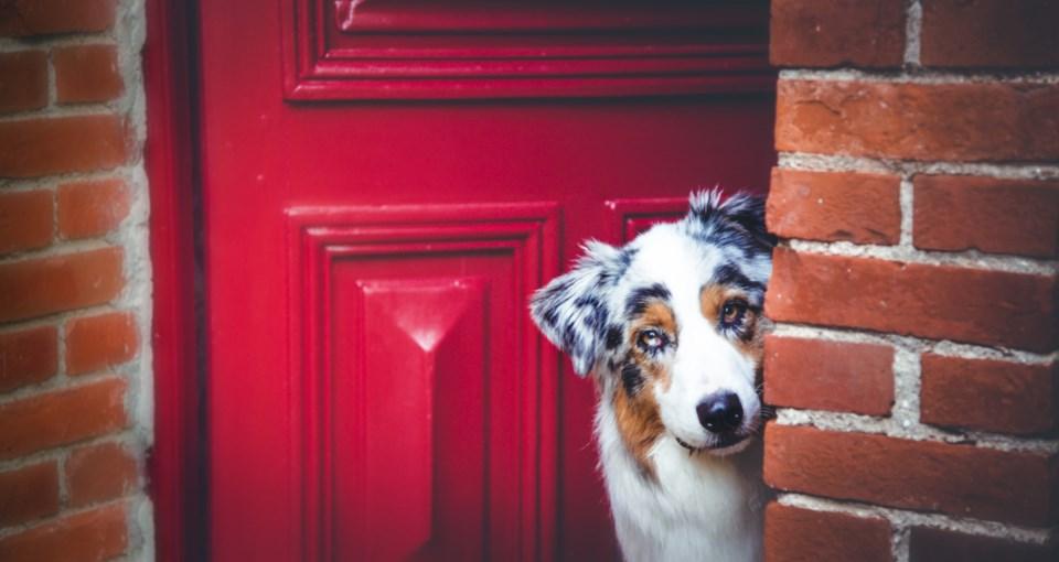 dog at door stock