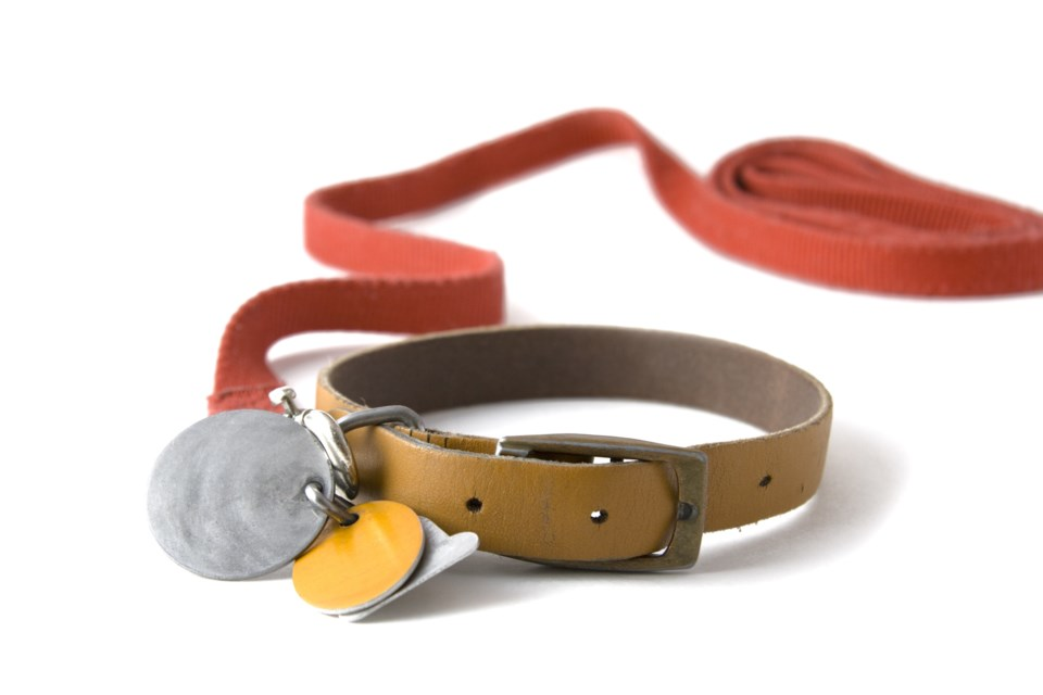dog collar pets stock