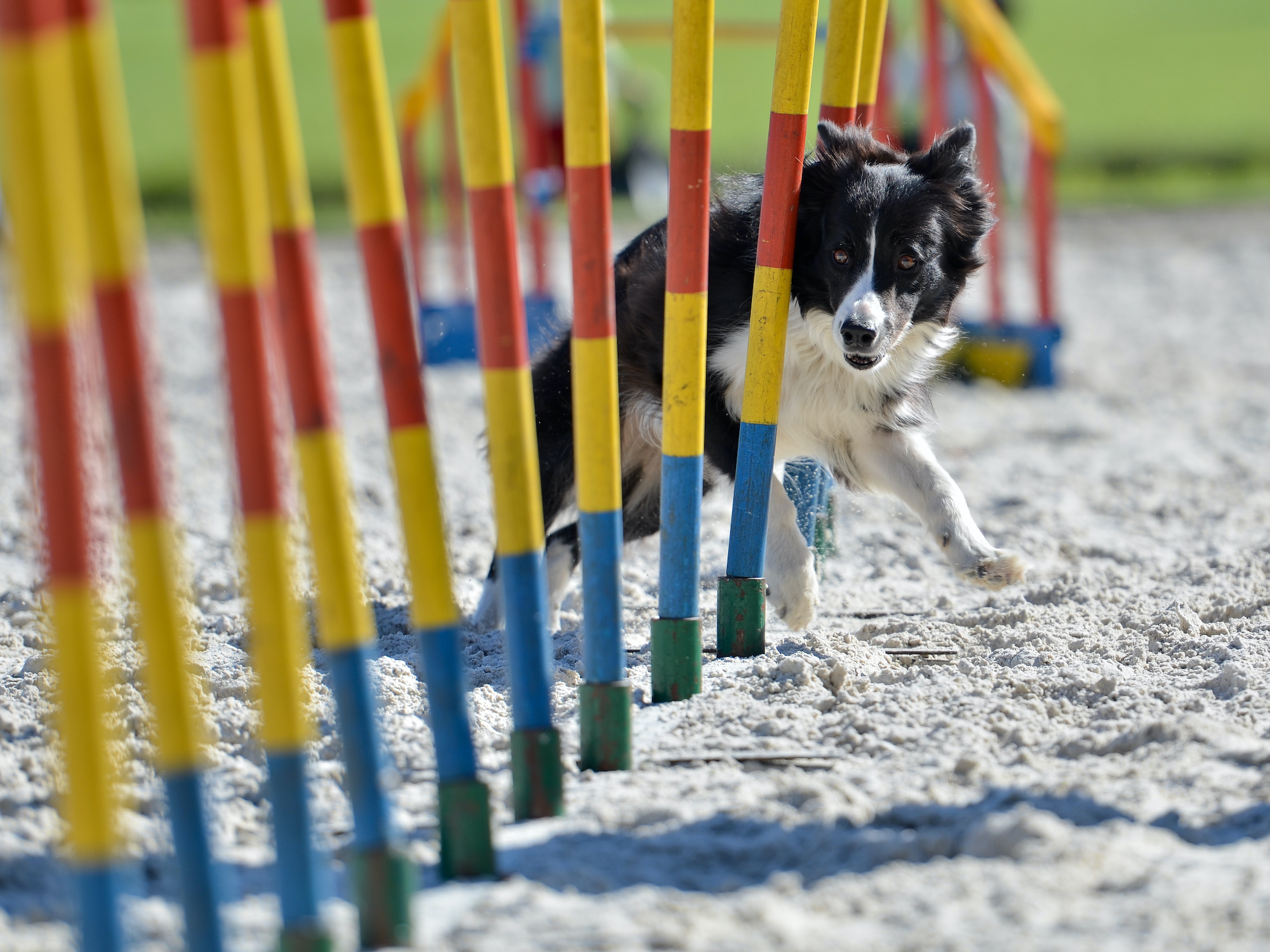 Driver doing donuts in dog park damages agility equipment