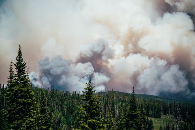 forest fire AdobeStock_162698386