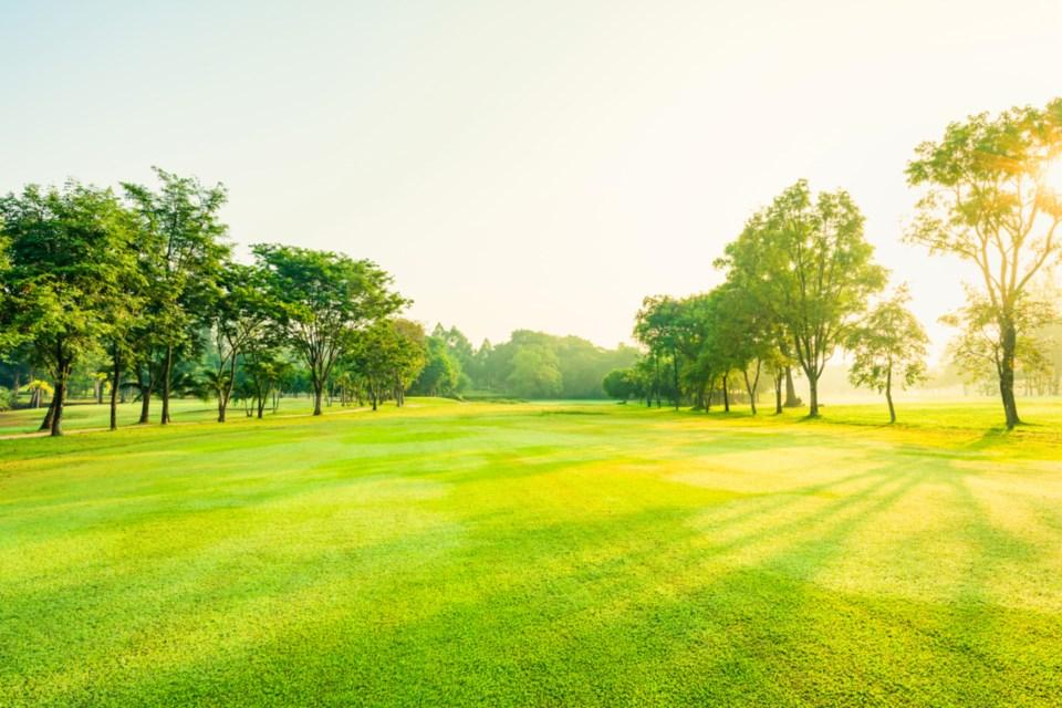 golf green stock