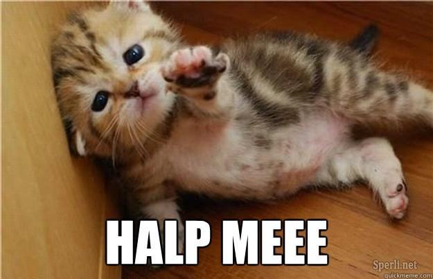 halp me kitten