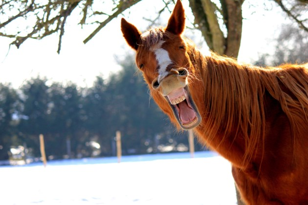 laughing horse stock
