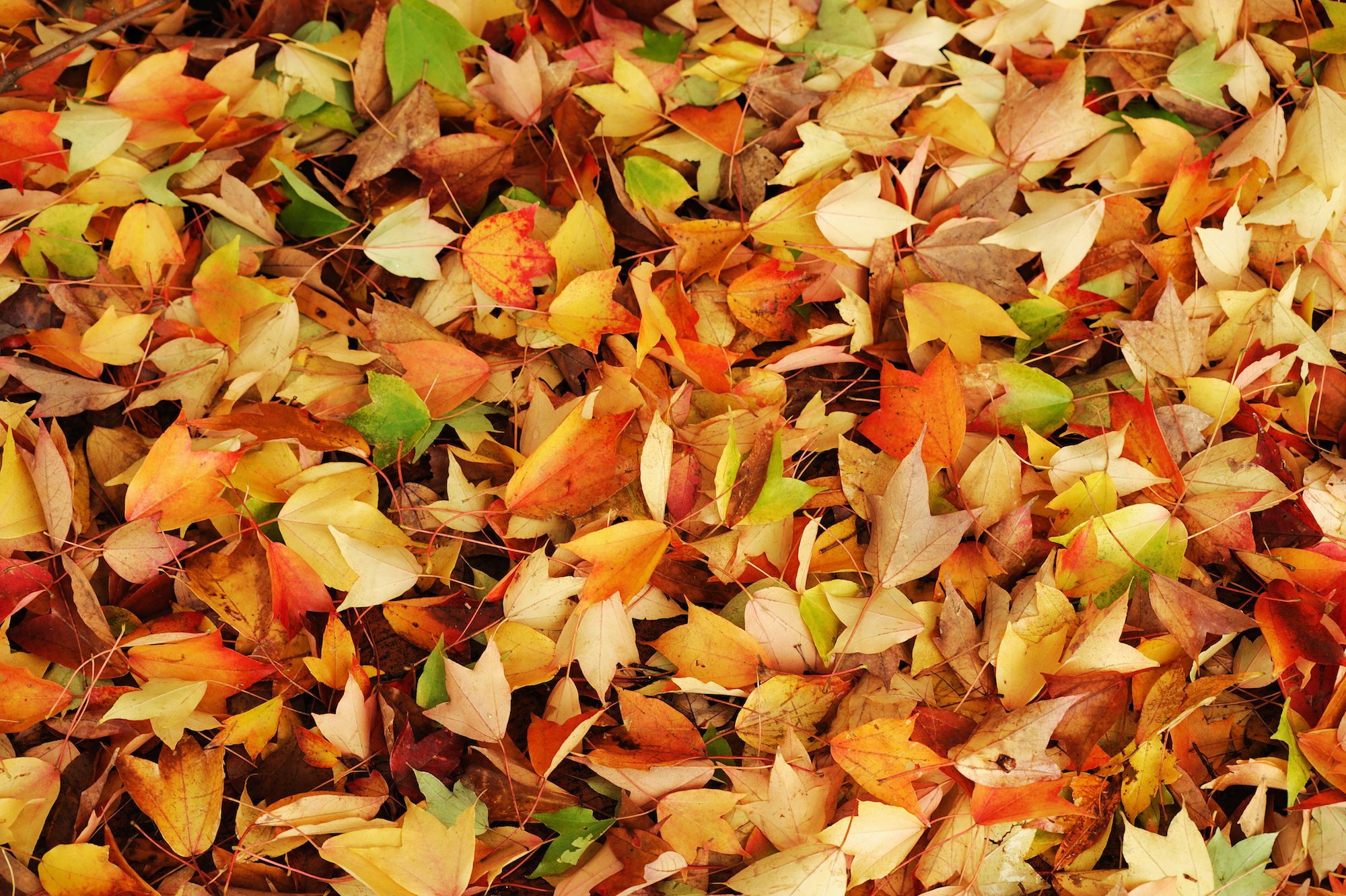Five free ways to get rid of your leaves this fall