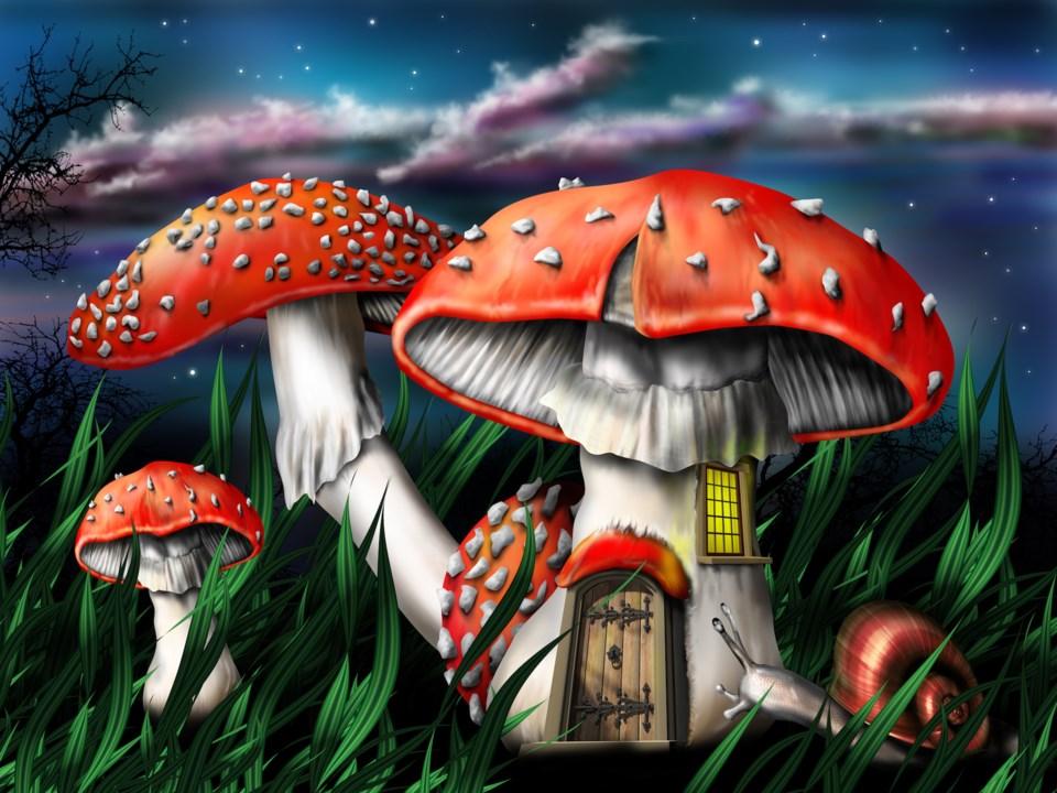 magic mushrooms stock
