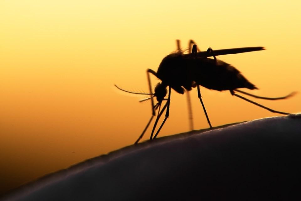 mosquito AdobeStock