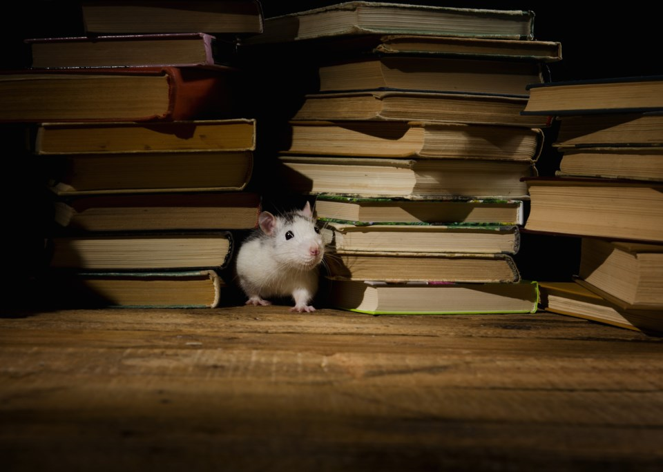 mouse books AdobeStock_115655995