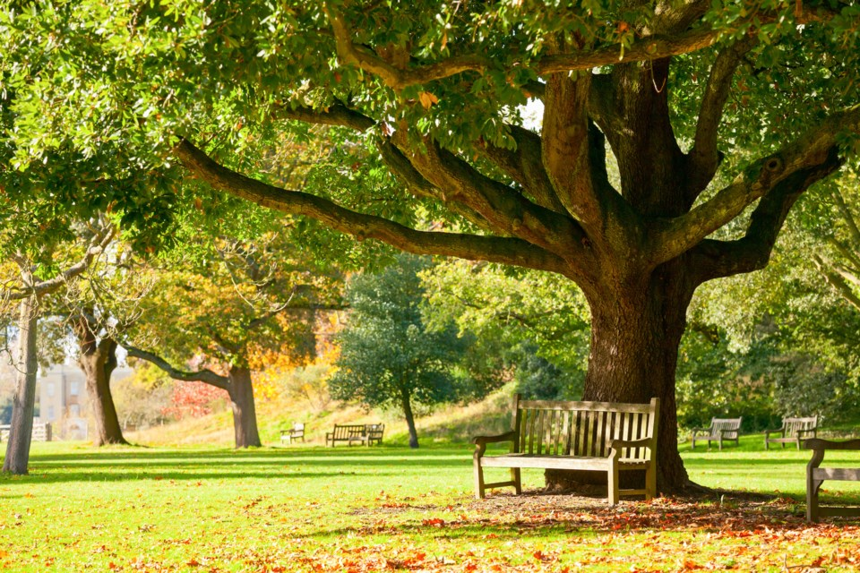 park bench AdobeStock_73236285