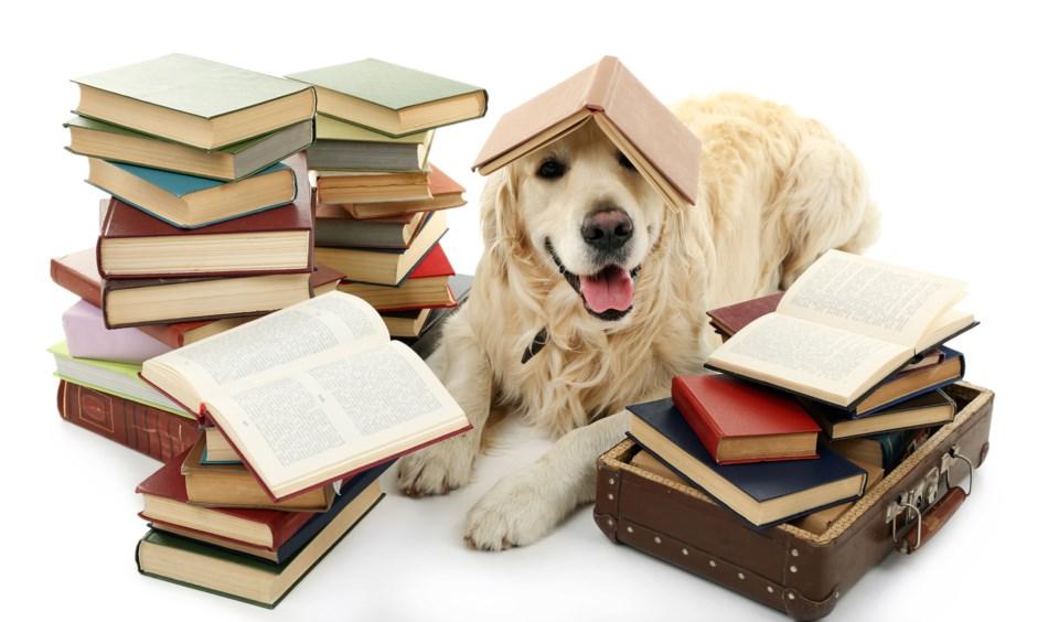 reading dog AdobeStock_87847735