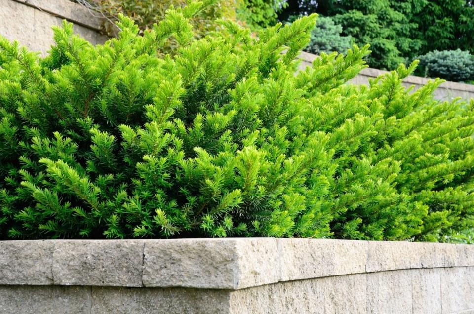 shrub AdobeStock_101165486