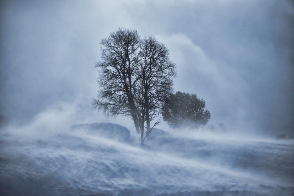 SnowStormTrees