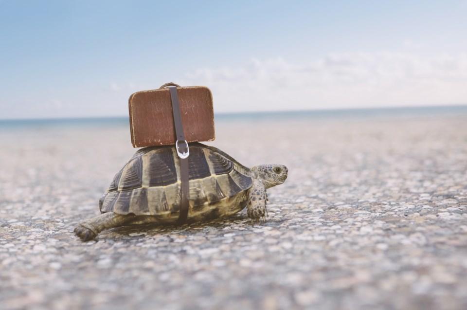 tortoise travel stock
