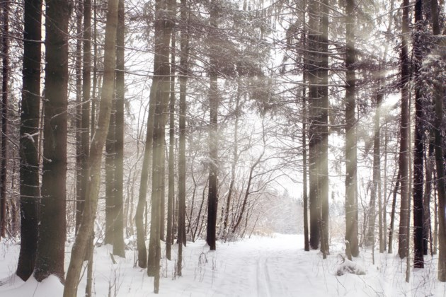winter forest trail stock