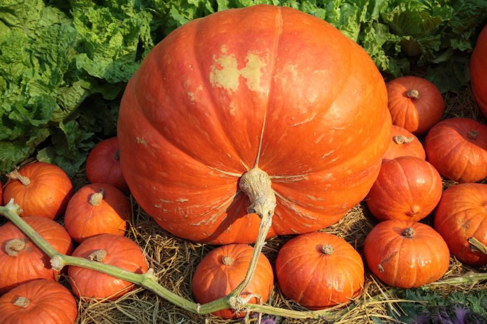 PumpkinShutterstock