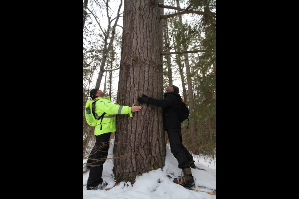 Don't hesitate to hug a tree. The benefits of tree emitted aerosols are many.
