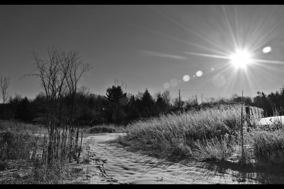 Black and white image of a frosted field in St. Joseph Township