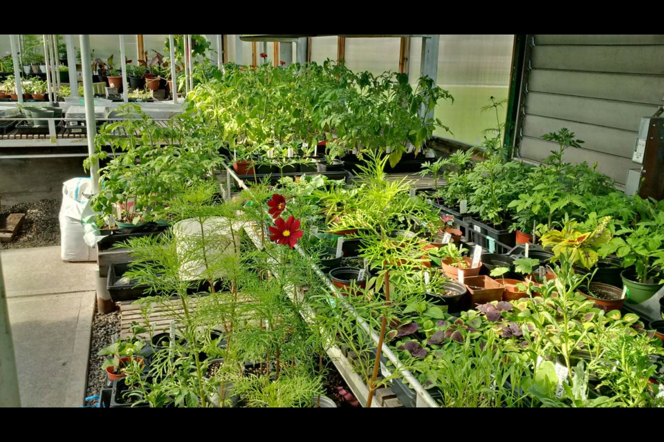 Canal greenhouse