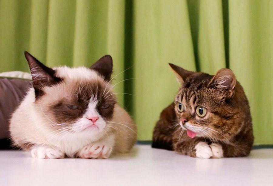 Grumpy cat Lil BUB