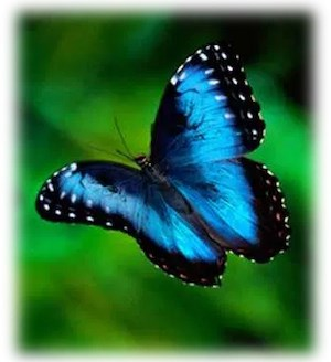 PAAT blue butterfly