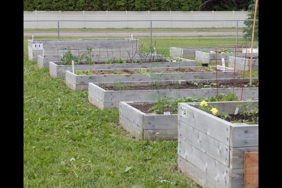 Common Ground Emmanuel Community Garden. Violet Aubertin for SooToday