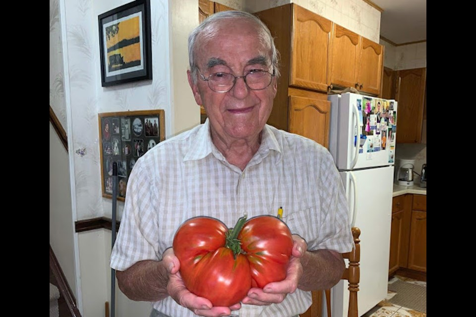 David Toppan and his 5 ib tomato. Photo supplied