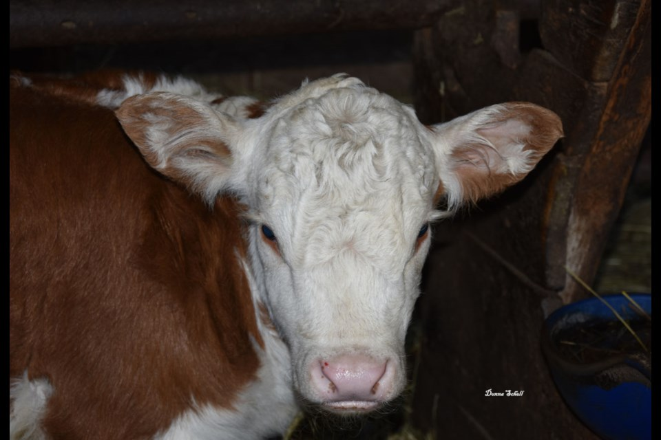 Named after Blue Jays player, Lourdes Guriell. Lourdes was born late April on the Coulter farm, St. Joseph Township.