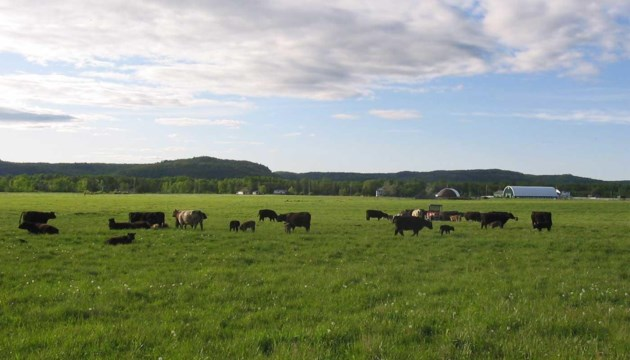 penokeanhills_cattle