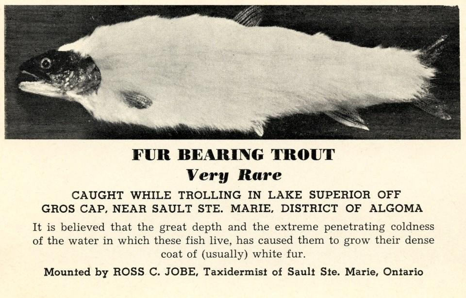 Fur Bearing Trout