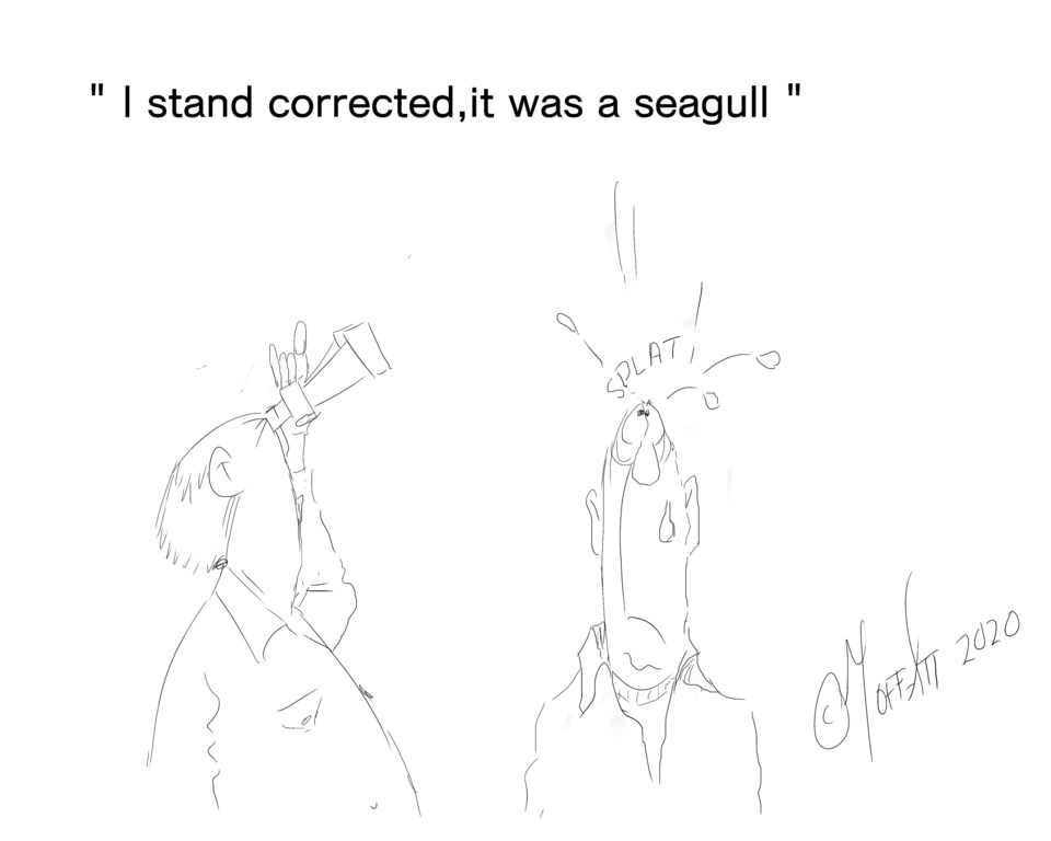 it was a seagull