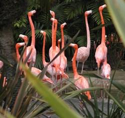 arts-flamingos
