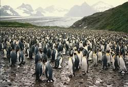arts-penguins