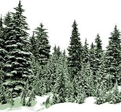 borealforestnews