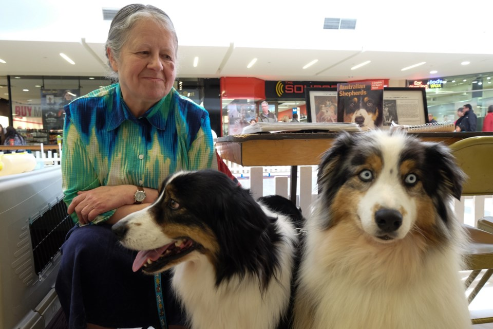 Owner JoAnne Johnson with her Australian Shepherd-breed dogs Molson, 8, (left) and Storm, 1, (right) at the 'Meet the Breed' dog show on Saturday. Johnson said Storm's unique and rather exceptional looking eyes are normal for her breed. Photo by Jeff Klassen for SooToday