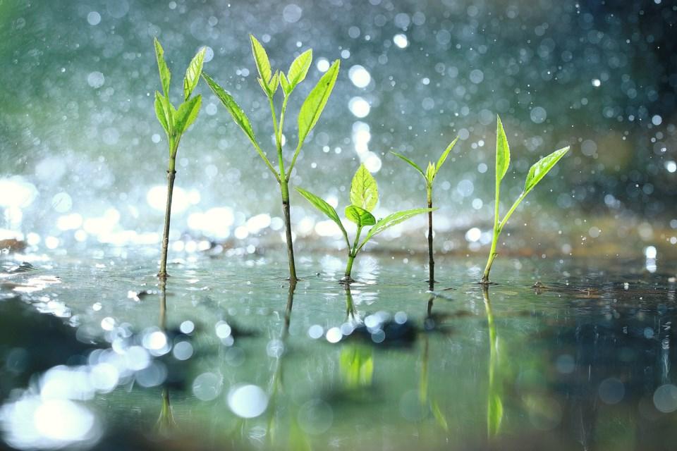 RainTreeSaplingsShutterstock