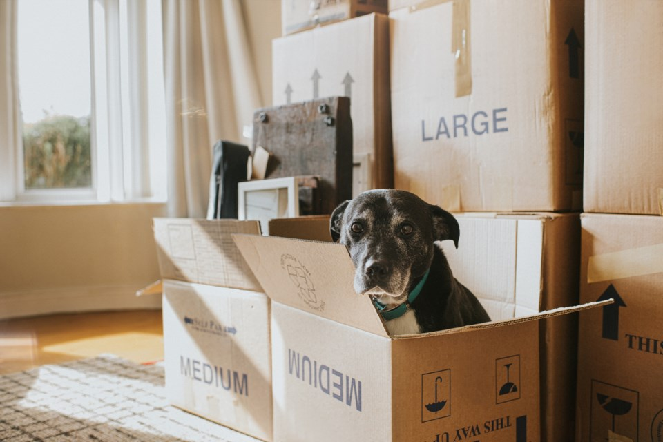 renting with a dog