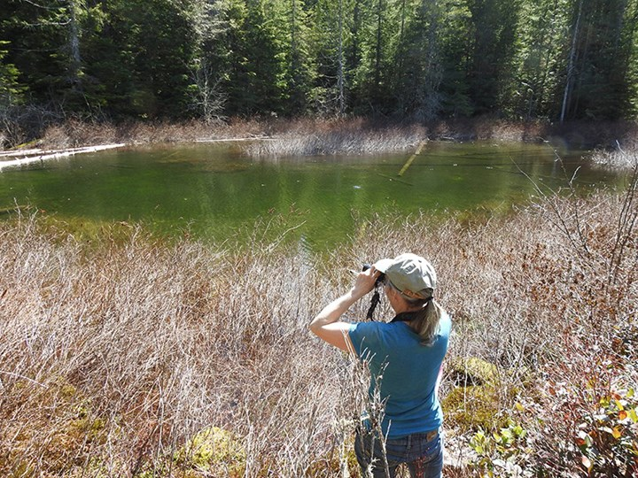 Squamish's Rachel Shephard doing survey work at Fawn Lake.