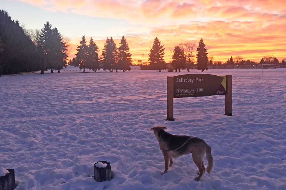 Tracey Mitford has taken her dog Charlotte to Salisbury Park for the last 12 years, and said she worries how the project will affect the park. TRACEY MITFORD/Supplied