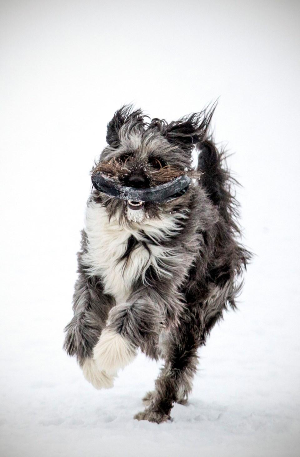 2602 dog licence file