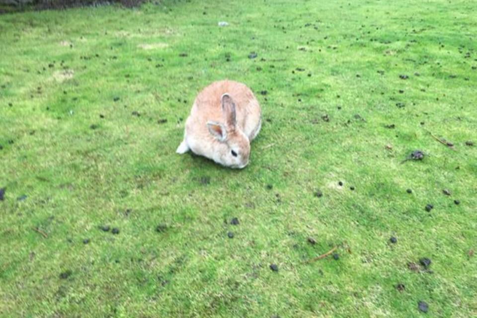 cp bunny disease