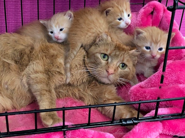 These sad cat faces will surely be purring with big smiles on Saturday during Little Cats Lost's Spring Aero Fitness Fling at Sturgeon Heights School. Families can take part in some professionally-led exercise classes all 'fur' the benefit of cats and kittens. LITTLE CATS LOST/Photo