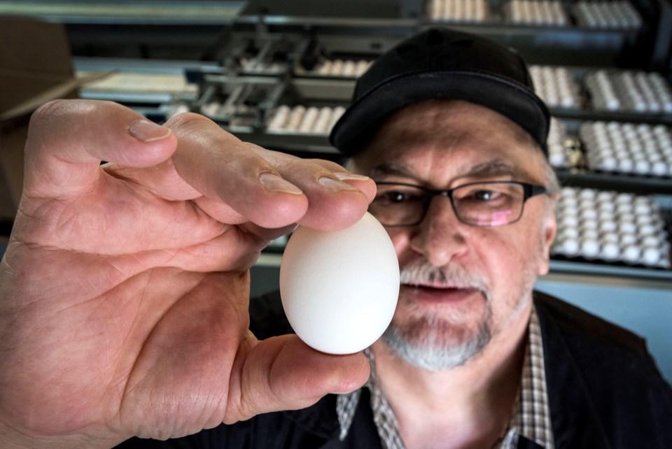 1505 EggFeat01b dr294